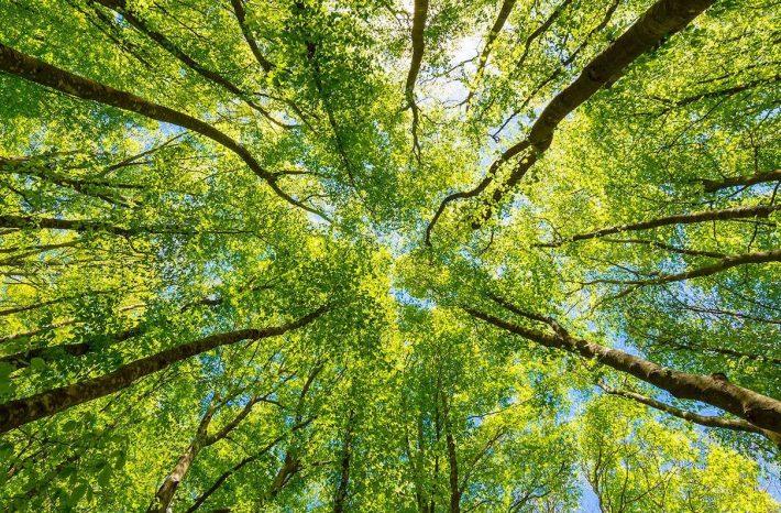 La gestion des chantiers implique le respect des questions juridiques sur l'environnement. [©DR]
